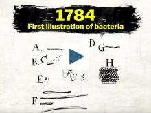 First illustration of bacteria in 1784