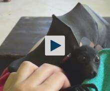 Bat getting his belly scratched