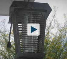 Bug Zapper Light