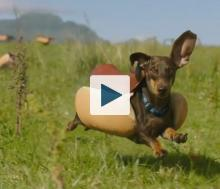 Wiener dog running
