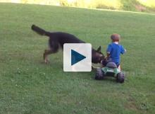 Dog attacking kids big wheel