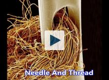 Needle and thread magnified