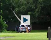Truck being smashed by a tree